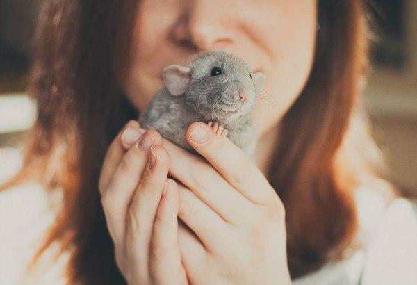 Сексуальность женщины крысы