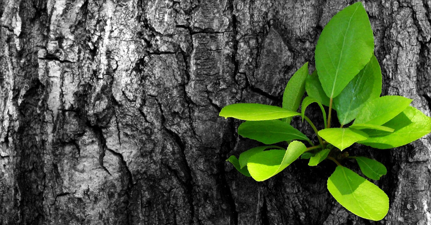 Druidi_Topol_start