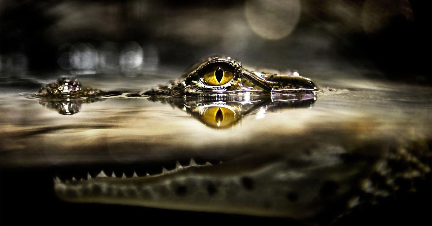 Maia_zodiak_krokodil