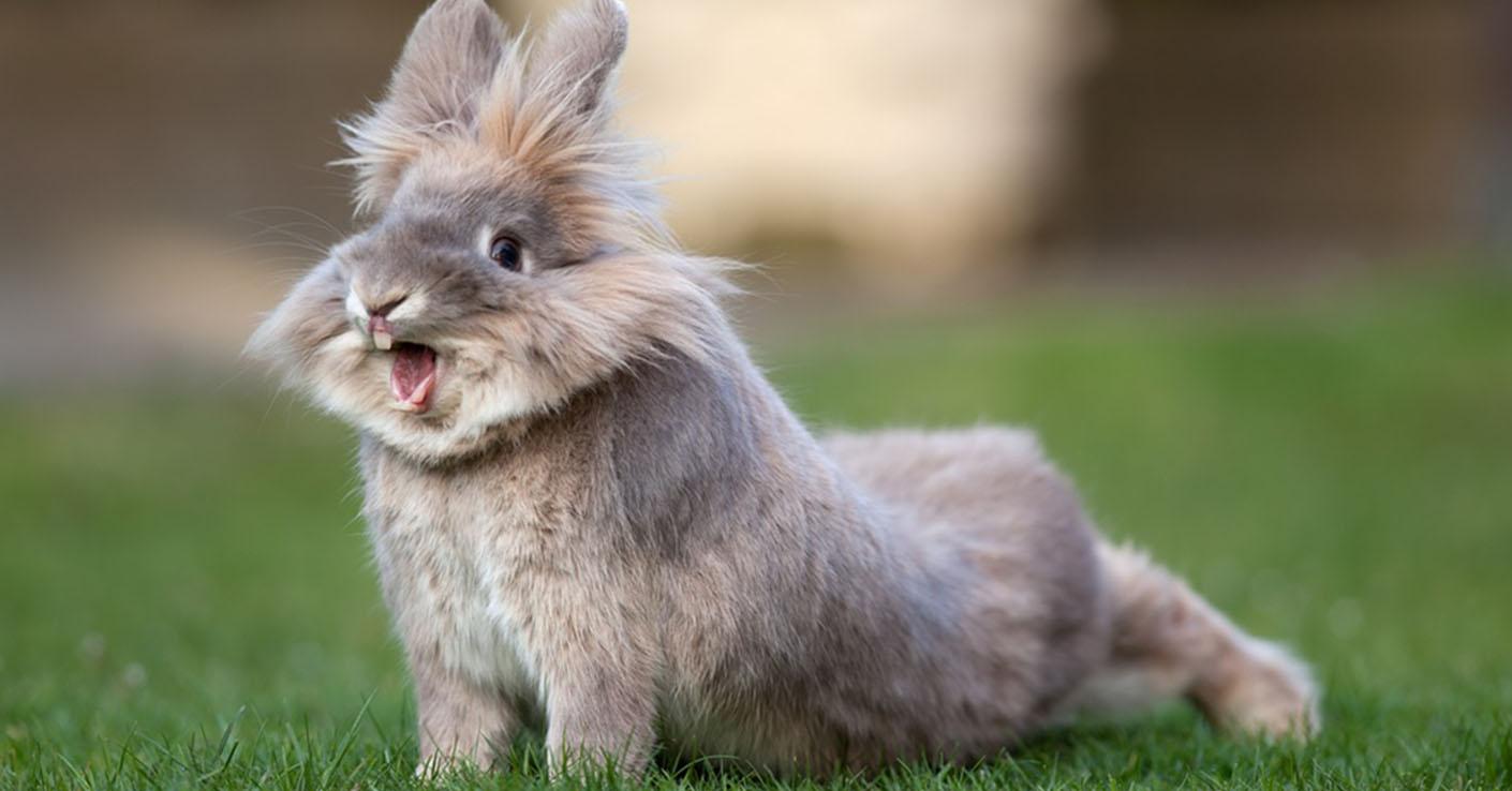 Прогноз для Кролика (Кота) на 2018 год Собаки