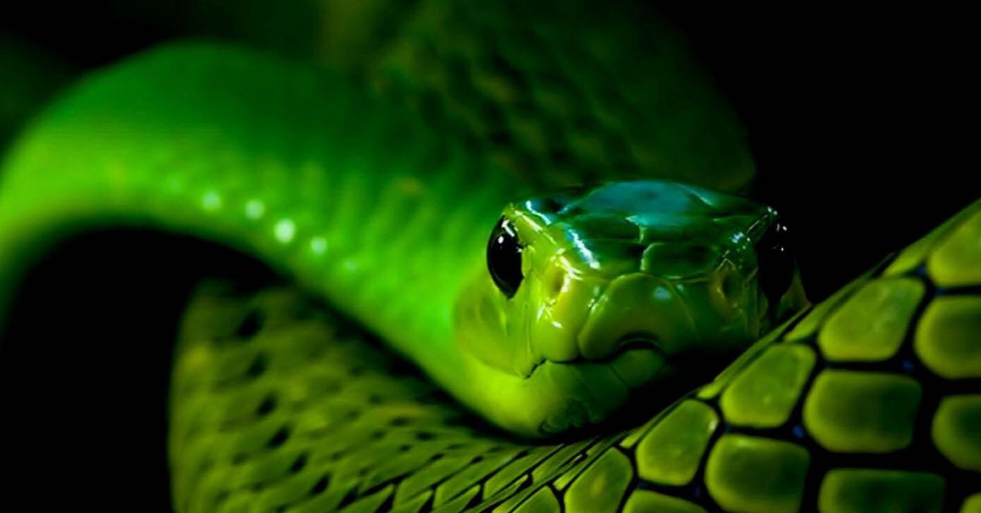 в год змеи и под знаком скорпион