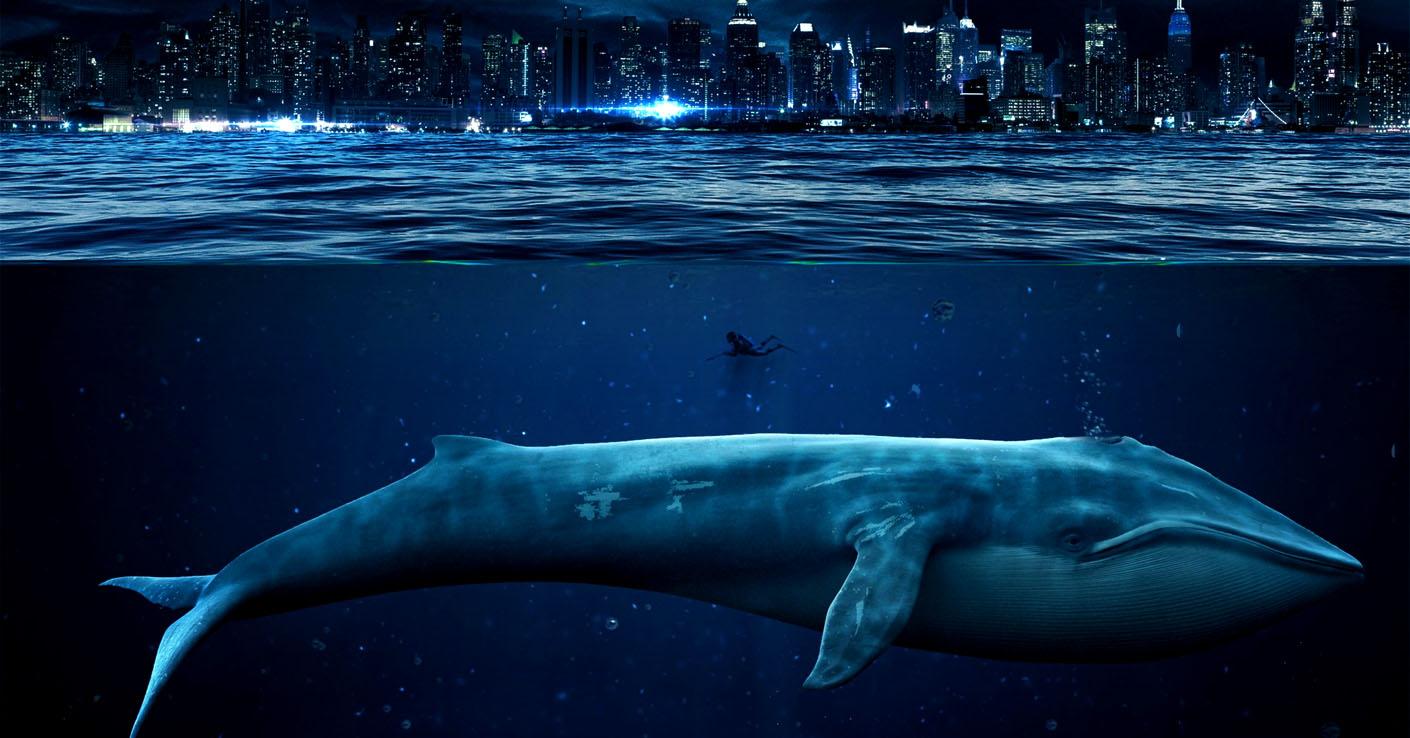 Обои на рабочий стол кит